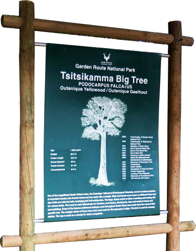 Tsitsikamma-Forest-Big-Tree