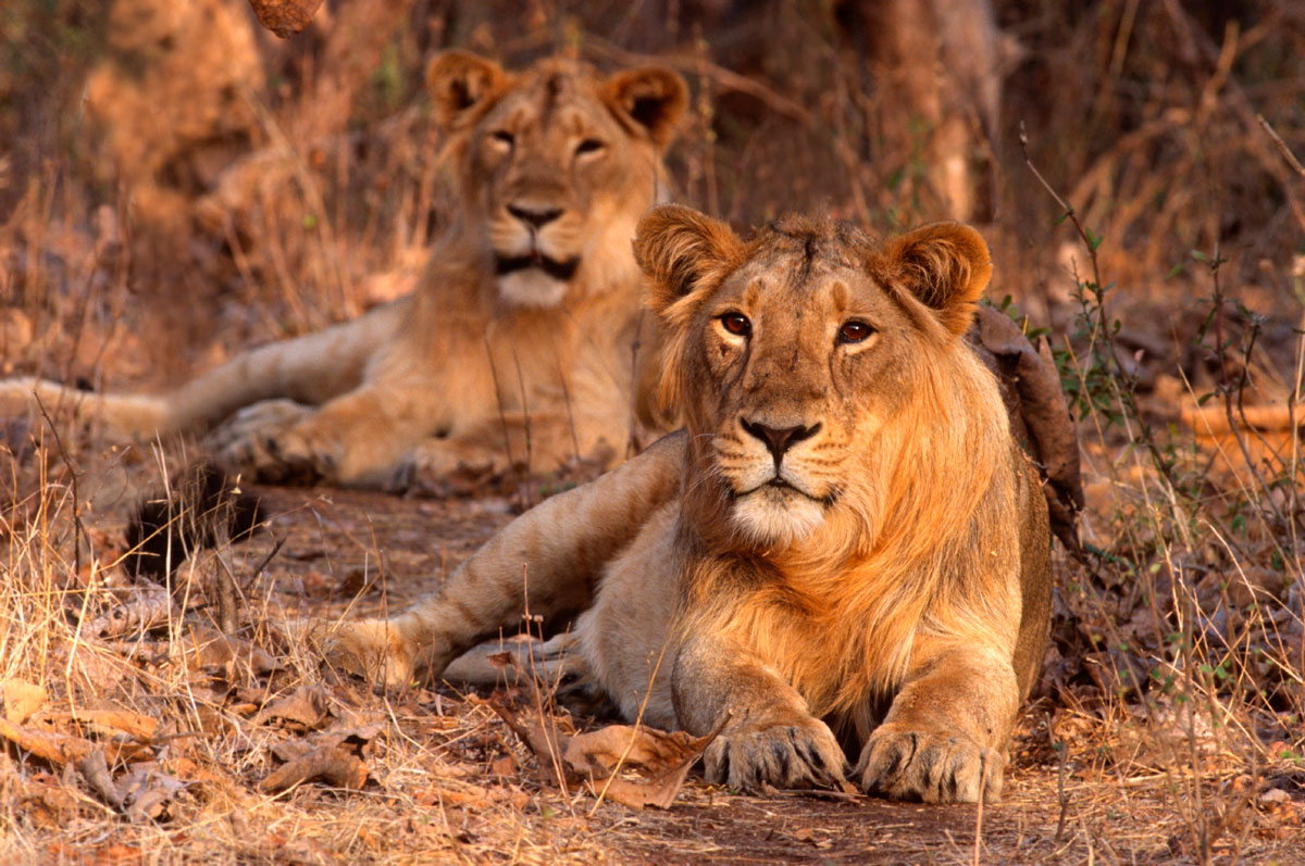 South Africa Garden Route - Adventures AfricaAdventures Africa ...