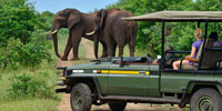 safari elephants