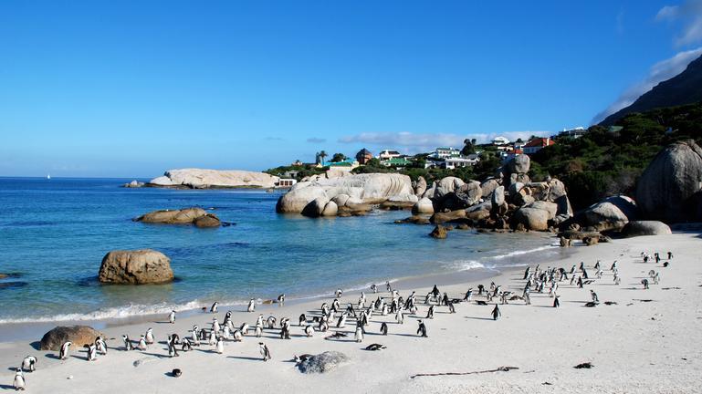 Boulders Penguins 3