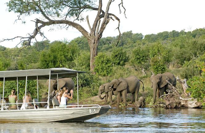 Chobe boat cruise elephants