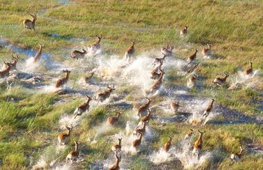 Okavango 1